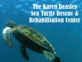 Karen Beasley Sea Turtle Rescue and Rehabilitation Center Hampstead Attractions